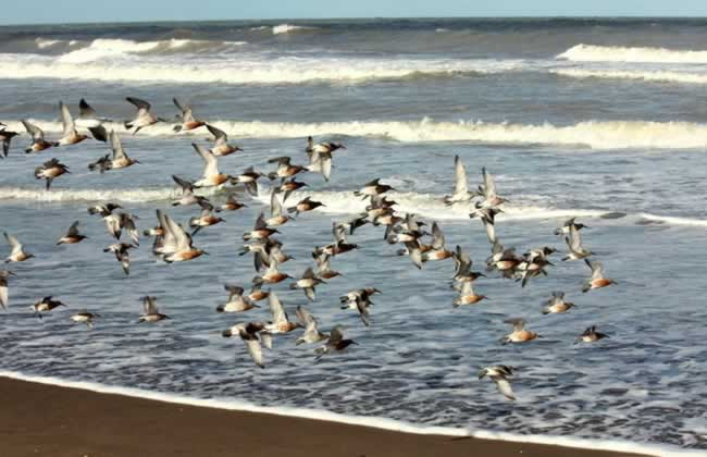 Gabiotas playa de Cariló