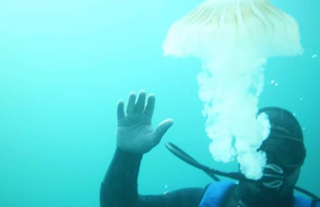 Buceo Mar del Plata