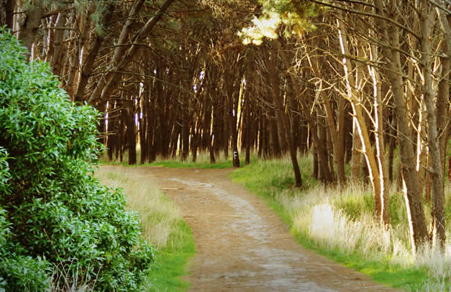 parque miguel lilo necochea 1 www.lugaresparavisitar.com.ar