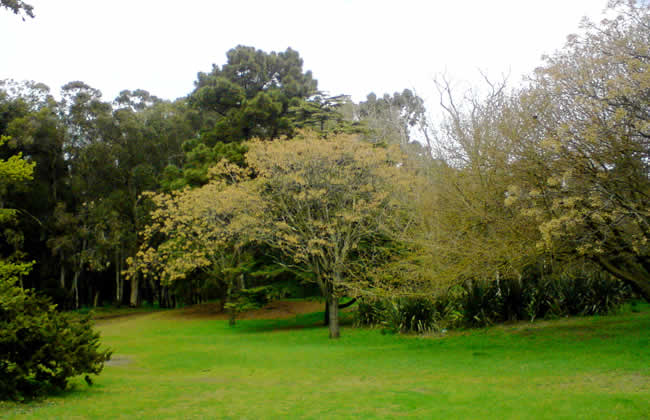 parque miguel lilo necochea 4 www.lugaresparavisitar.com.ar